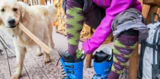 Person with dog wearing ski socks